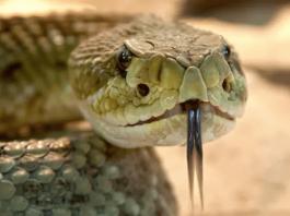 dead-snake-bite-us-man